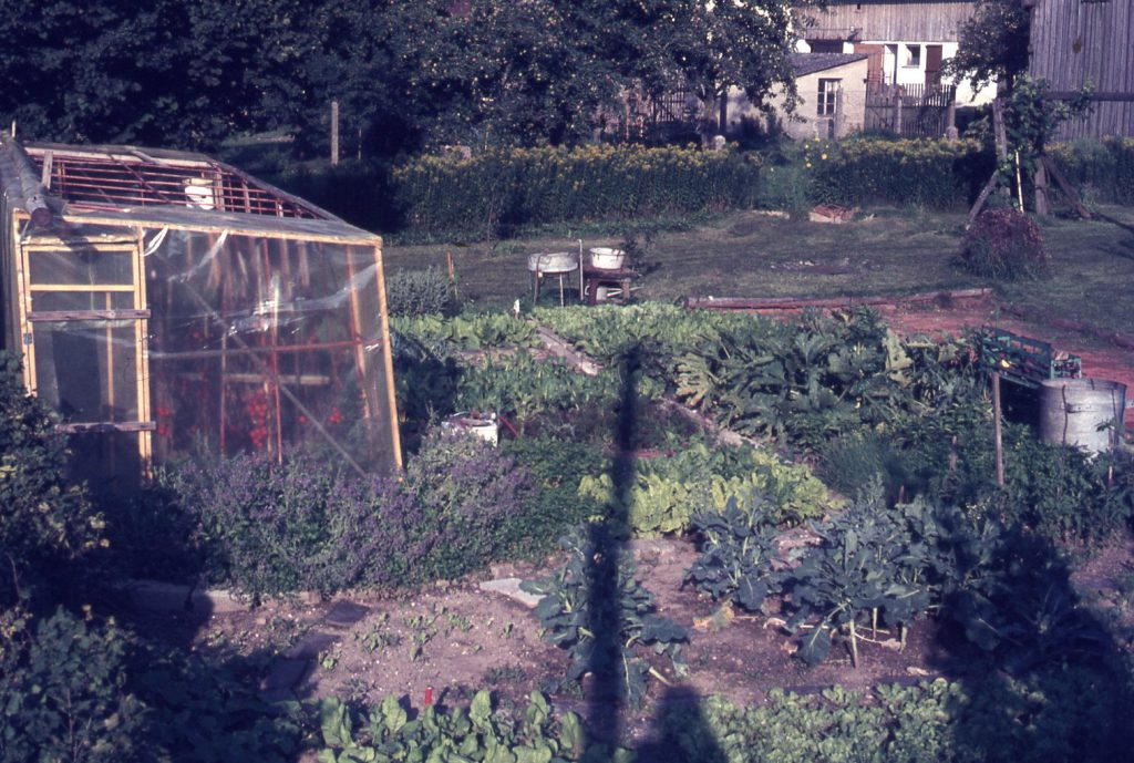 Vegetables growing in front of the glass house on former dug-up ground and inside. Large tree and bushes in the back.