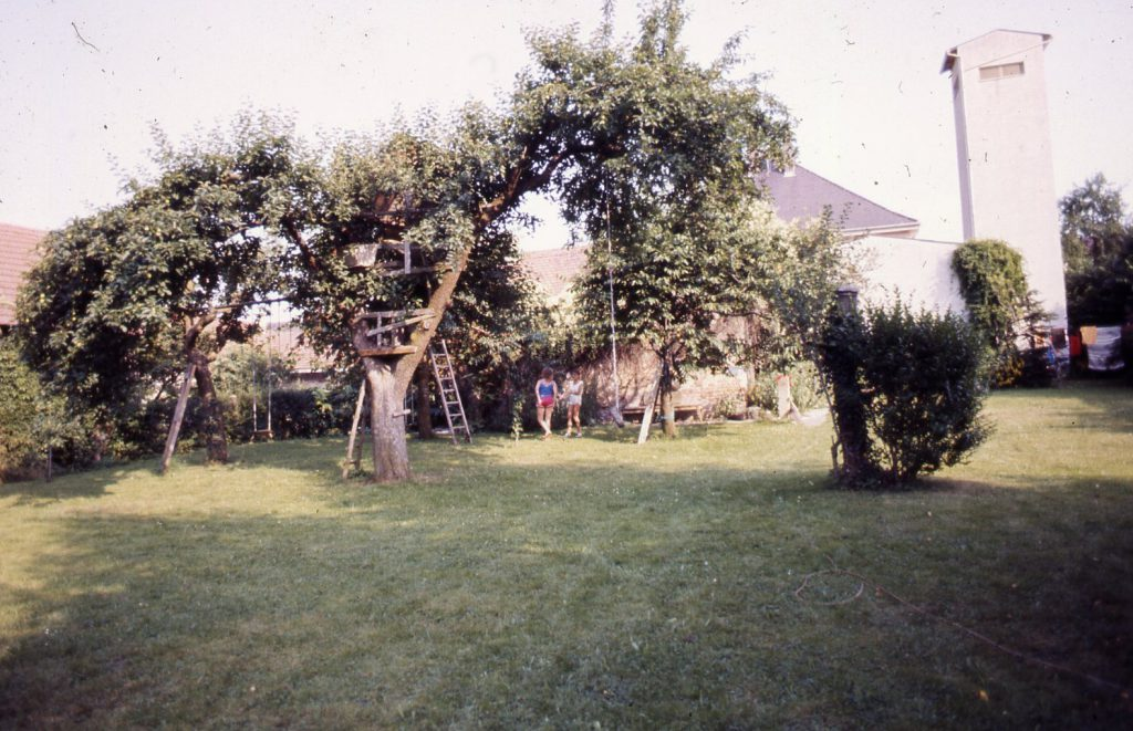 Large old tree in the garden.