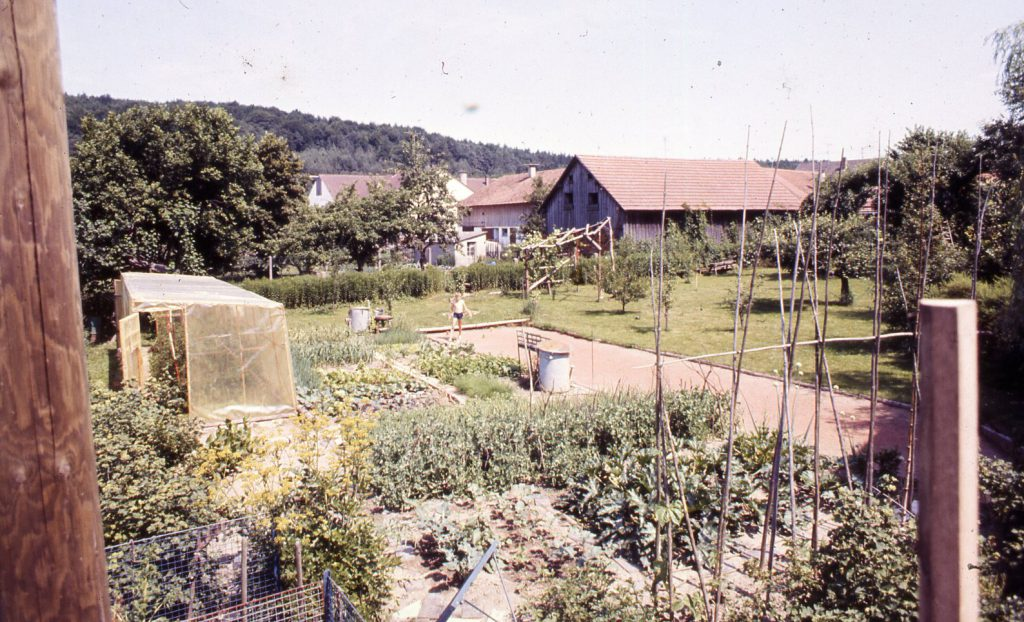 Cultivation area around the glasshouse expands. Vegetables growing all over.