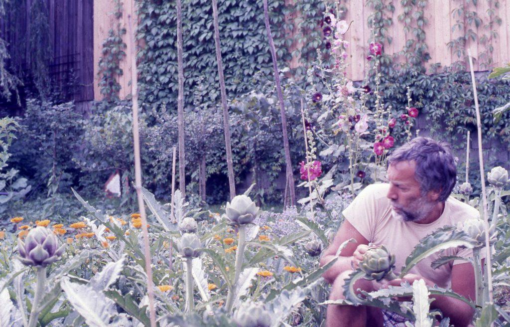 Man inbetween vegetable plants holding an artichoke.