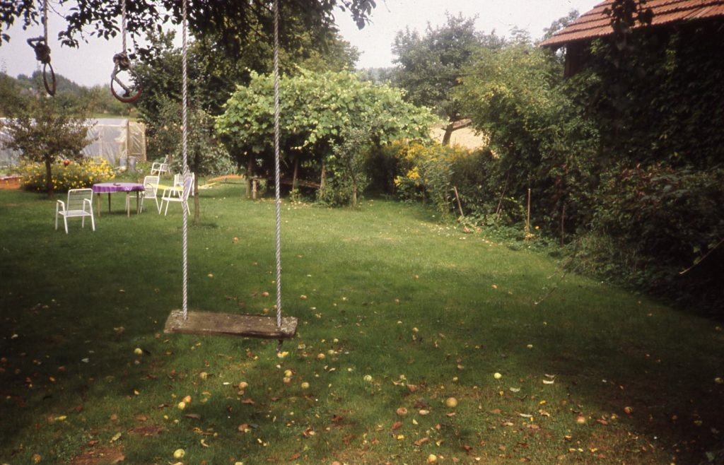 Swing hangs on tree. Large bushes and trees beside glasshouse in the back.